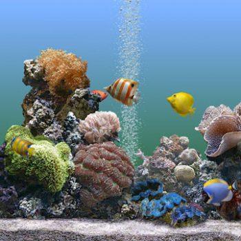 Корм для аквариумных рыб