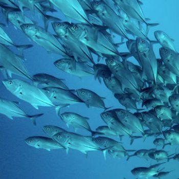 Корм для рыбных хозяйств